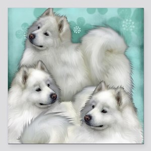 "samoyed dogs Square Car Magnet 3"" x 3"""