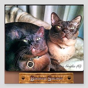 """Burmese cat siblings, 2 Square Car Magnet 3"""" x 3"""""""
