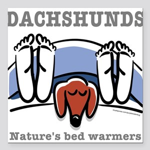 Dachshund bed warmers Square Car Magnet
