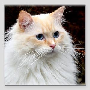 "Ragdoll Cat 9Y448D-019 Square Car Magnet 3"" x 3"""