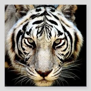 "tiger Square Car Magnet 3"" x 3"""