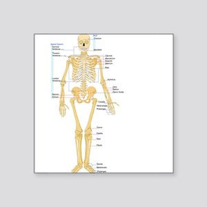 Skeleton chart Sticker
