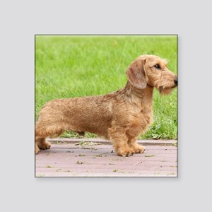 "Dachshund 9Y426D-178 Square Sticker 3"" x 3"""