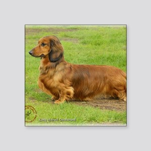 "Dachshund 9R086D-033 Square Sticker 3"" x 3"""
