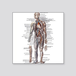 "Anatomy of the Human Body Square Sticker 3"" x 3"""