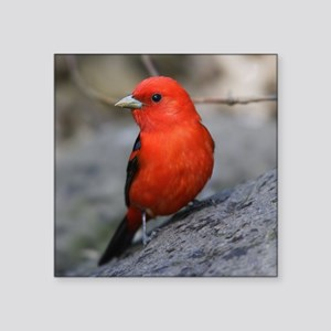 "Tanager Square Sticker 3"" x 3"""