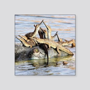 "Baby Alligators Square Sticker 3"" x 3"""