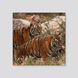 "(4) Tigers Two Walking Square Sticker 3"" x 3"""
