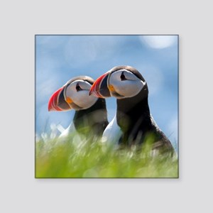 """Puffin Pair 7.355x9.45 Square Sticker 3"""" x 3"""""""