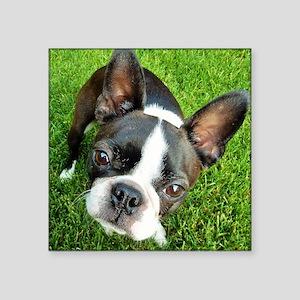 "Boston Terrier Gaze Square Sticker 3"" x 3"""