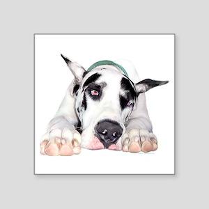 "Great Dane Shy Harlequin Square Sticker 3"" x 3"""