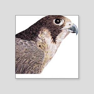 Peregrine Falcon Square Sticker