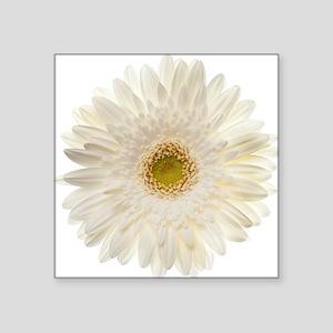 """White gerbera daisy isolate Square Sticker 3"""" x 3"""""""