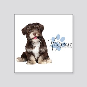 "Havanese Puppy Square Sticker 3"" x 3"""