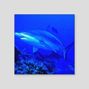 "Black Tip Shark Square Sticker 3"" x 3"""