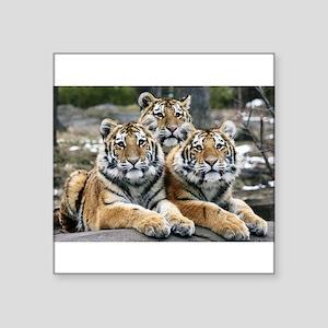 "TIGERS Square Sticker 3"" x 3"""