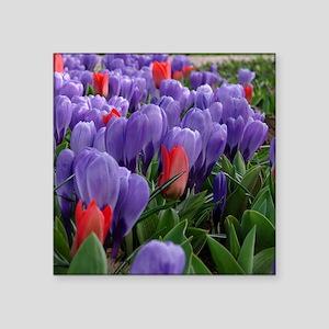 "Purple  Red Tulips at Keuke Square Sticker 3"" x 3"""