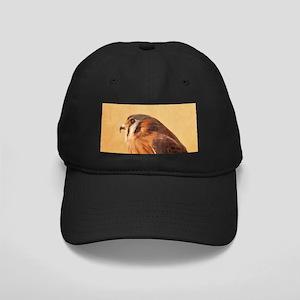 American Kestrel Black Cap with Patch