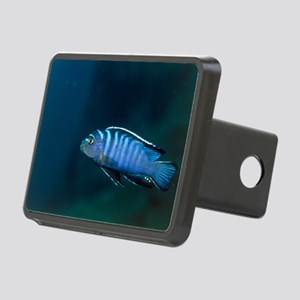 Zebra cichlid Rectangular Hitch Cover