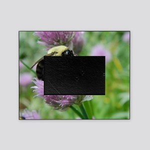 bumblebee sleeping chive Picture Frame