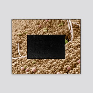 Bee pollen basket, SEM Picture Frame