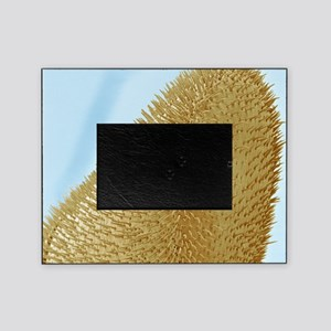 Bee antenna, SEM Picture Frame