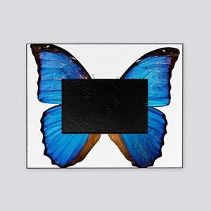 Animals Blue Butterfly Picture Frame