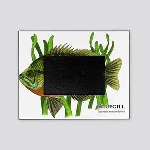 Bluegill Picture Frame