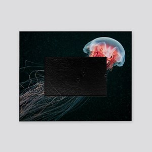 Lion's mane jellyfish Picture Frame