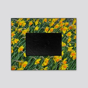 Bright yellow daffodils garden Picture Frame