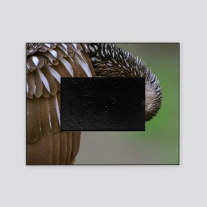 Limpkin Picture Frame