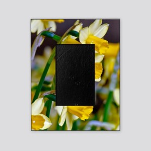 Yellow Daffodils Picture Frame