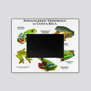 Endangered Tree Frogs of Costa Rica Picture Frame