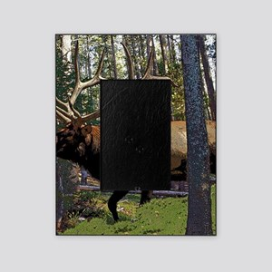 Bull elk in pines Picture Frame