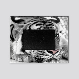 Lazy Tiger Picture Frame