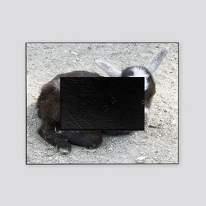 Curled Up Baby Goat Picture Frame