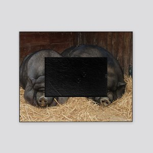 Pot Bellied Pigs Lisbon Zoo_July_200 Picture Frame