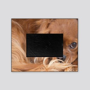 Sweet Friend Ruby Cavalier King Char Picture Frame