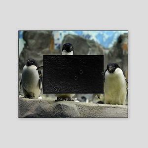 Adelie Penguins Picture Frame