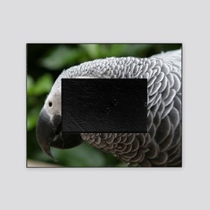 African Grey Parrot Picture Frame