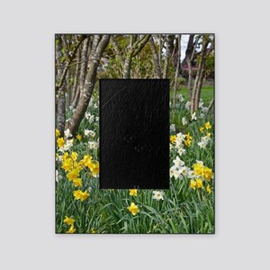Yellow spring daffodils Picture Frame