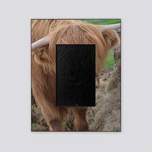 Young Highland Cow Picture Frame