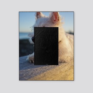 West Highland Terrier puppy on wood Picture Frame