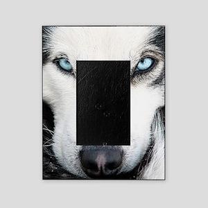 Blue Eyed Husky Picture Frame