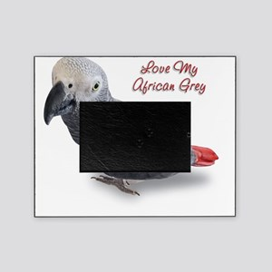 African Grey Picture Frame