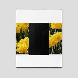 Daffodil flowers in bloom in garden Picture Frame