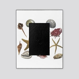 shells Picture Frame