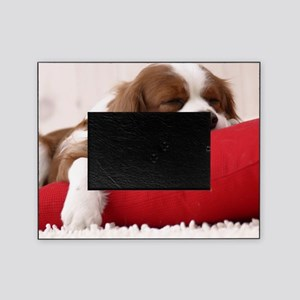 Spaniel pillow Picture Frame