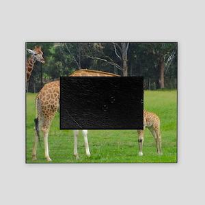 Baby Giraffe Picture Frame