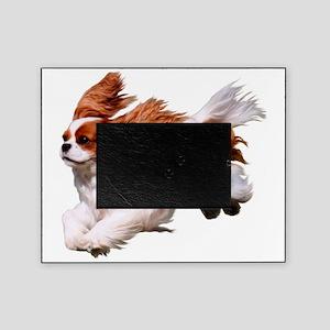 Cavalier Running- Blenheim Picture Frame